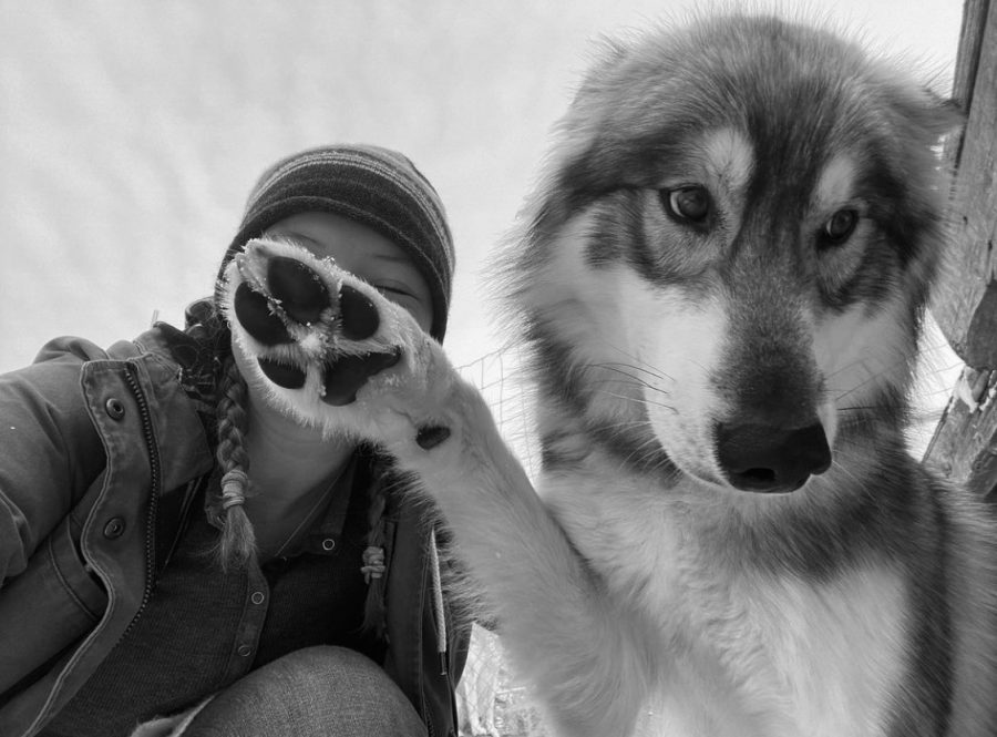 Louisa alumni Annabelle Anderson now spends her days caring for 25 Hedlund Huskies in Northern Minnesota.