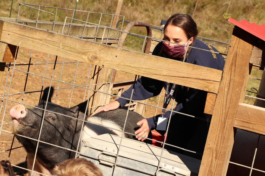 Ag teacher Kristin Watkins  provides opportunities for students to learn and experience the world of agriculture by raising market pigs at school.